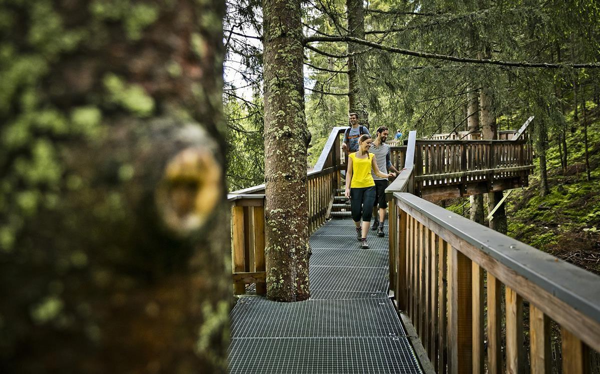 Baumzipfelweg im Tal der Spiele Saalbach-Hinterglemm